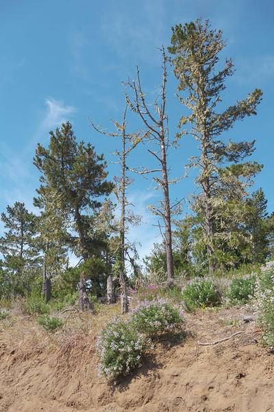 Trailside Trees