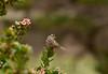Visit to Santa Cruz Island, Channel Islands National Park, California