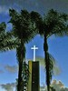Tower of Hope in a palm frame