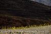 Death Valley, Jubilee Pass (3)