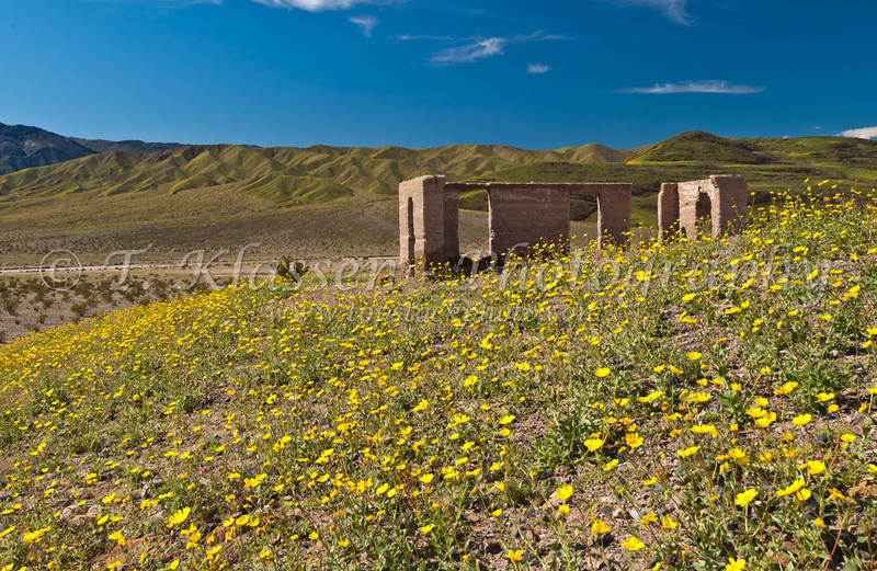 Ruins of the Asford Mines and Desert Gold wildflowers on the hillsides in the southern part of Death Valley, California, USA.