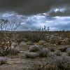 Desert Before The Storm
