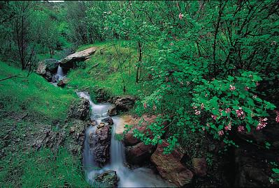 Shelf Road waterfall