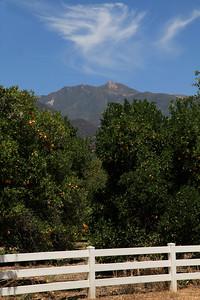Chief Topa Topa and orange trees