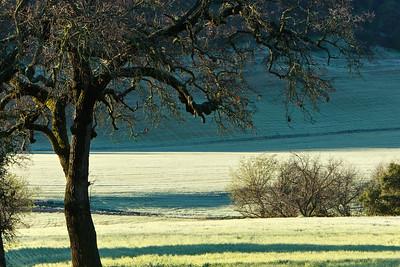 Upper Ojai Valley hayfield following a heavy frost