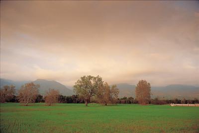 Ojai Valley hayfield