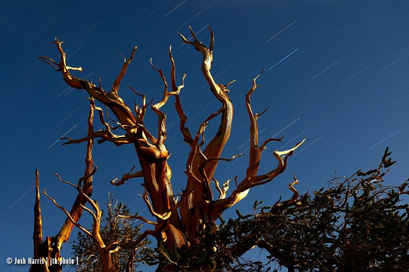 Ancient Bristlecone Pine Forest, August 2013.
