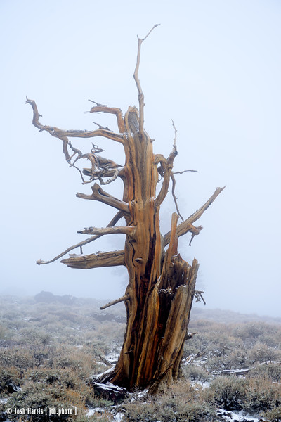 Bristlecone National Forest, White Mountain, May 2015.