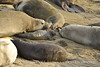Elephant seal mom and babies, San Simeon CA (31)