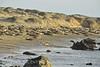 Elephant Seal Rookery, San Simeon, CA (2)