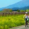 Biking through California's Suisun Valley