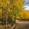 Roadside Aspen Color