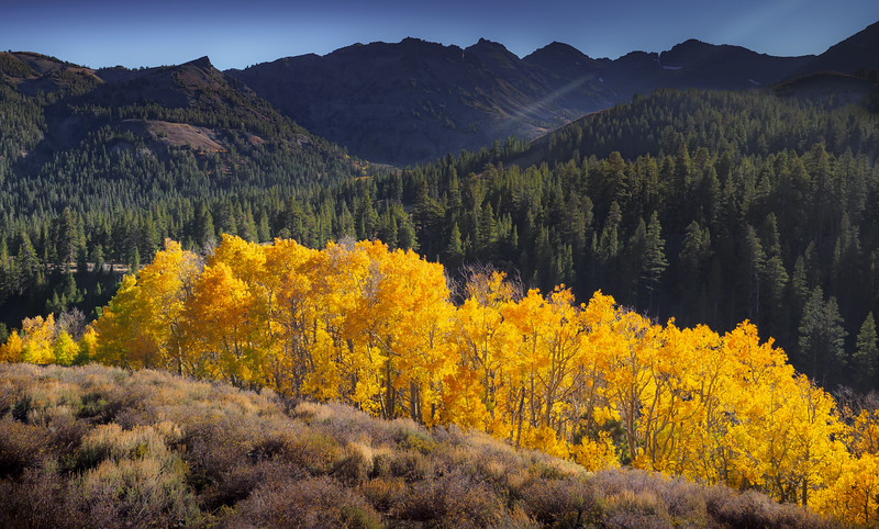October Aspens-Sonora Pass