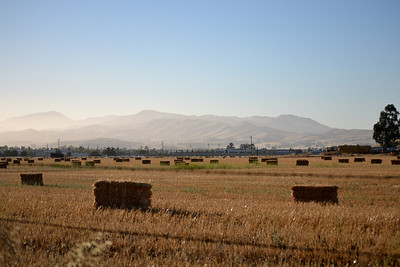 Back in Livermore...Bales of hay on Patterson Pass/Greenville corner.