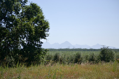 Sutter Buttes in Background.     That's actually a rice field mid foreground.