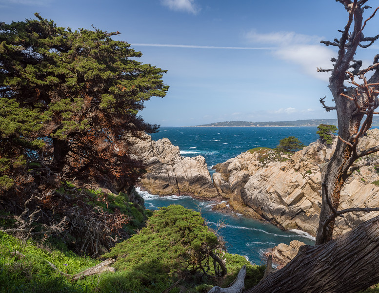 Trees on the Coast