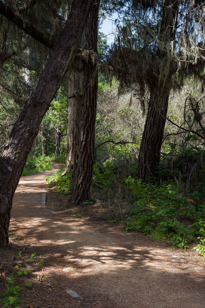 Trees and Trail