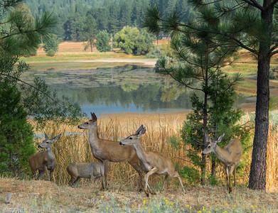 Mace Meadpws, Buckhorn, CA