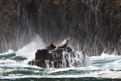 Channel Islands National Park - California sea lions near Arch Rock, Anacapa Island