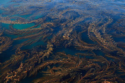 Channel Islands National Park, Santa Cruz Island - Kelp in Scorpion Anchorage.