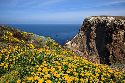 Springtime flowers at Cavern Point