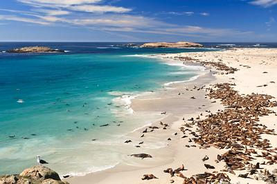 Channel Islands National Park - Point Bennett, San Miguel Island