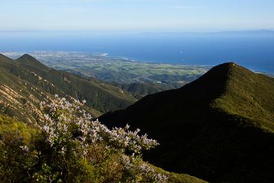 Goleta - Springtime wild flowers along West Camino Cielo, Santa Ynez Mountains.  Ceanothus in foreground, Goleta below.