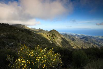 Goleta - Springtime wild flowers along West Camino Cielo, Santa Ynez Mountains.  Bush poppy in foreground, Goleta Valley below.