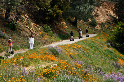 San Rafael Wilderness - Figueroa Mountain, Los Padres National Forest, Segway riders enjoying springtime wildflowers.