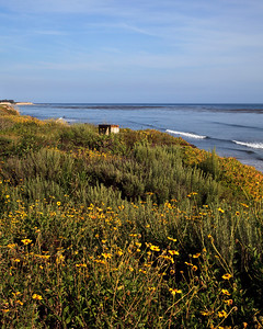Goleta - Wildflowers and bench at Coal Oil Point.