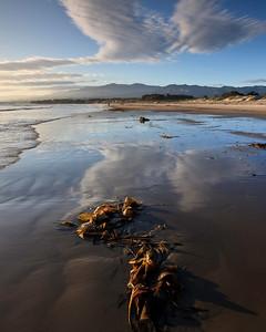 Goleta - Kelp along shore at Coal Oil Point