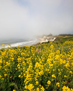 Goleta - Santa Barbara Shores County Park/Ellwood Mesa.