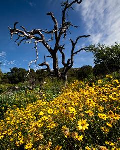 Goleta Valley - Arroyo Hondo Preserve