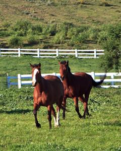 Goleta Valley - Horse ranch