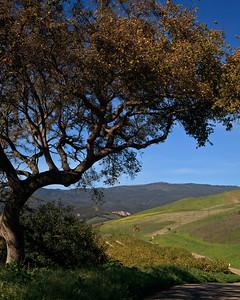 Goleta Valley - Refugio Road lemon orchard