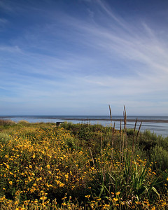 Goleta - Wildflowers at Coal Oil Point.