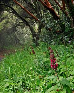 Goleta Valley - Springtime along Refugio Road, Santa Ynez Mountains.