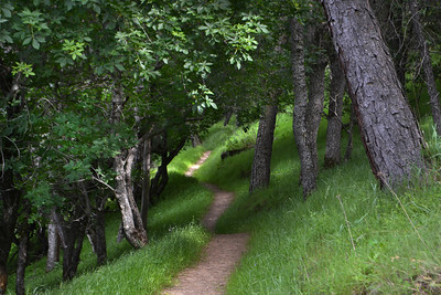 117 - Vellacitos Trail, Del Valle.   This short, 1 mile long trail along a ravine is a shaded, forested delight with short but steep inclines and switchbacks.    On this hike, for the first time I heard water gurgling in the bottom of the ravine.   Jazz, my dog, startled by a horseback rider coming around a bend, took off in the opposite direction like she'd seen a ghost!  Abandoned on the trail by mans best friend, I had to go in search of her, backstepping 100 feet or so before I found her.  We engage in role reversal, this dog an I.   Protector and protected, we flip flop like a live fish in a frying pan, contingent upon the scenario encountered. (EBRP-Del Valle)