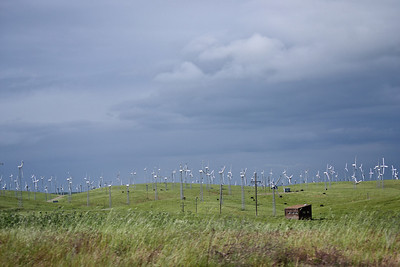 121 - Altamont Pass Wind Farm with cows grazing.
