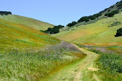 Green hills, spring flowers, and blue skies fill out the days color palette. (EBRP-Brushy Peak)