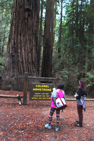 Armstrong Redwoods State Natural Reserve, Colonel Armstrong Redwood