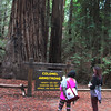 Healdsburg California, Armstrong Redwoods State Park, Colonel Armstrong Redwood