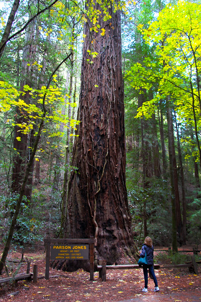 Armstrong Redwoods State Natural Reserve,  Parson Jones Redwood Tree