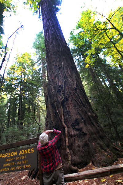 Armstrong Redwoods State Natural Reserve, Parson Jones Redwood