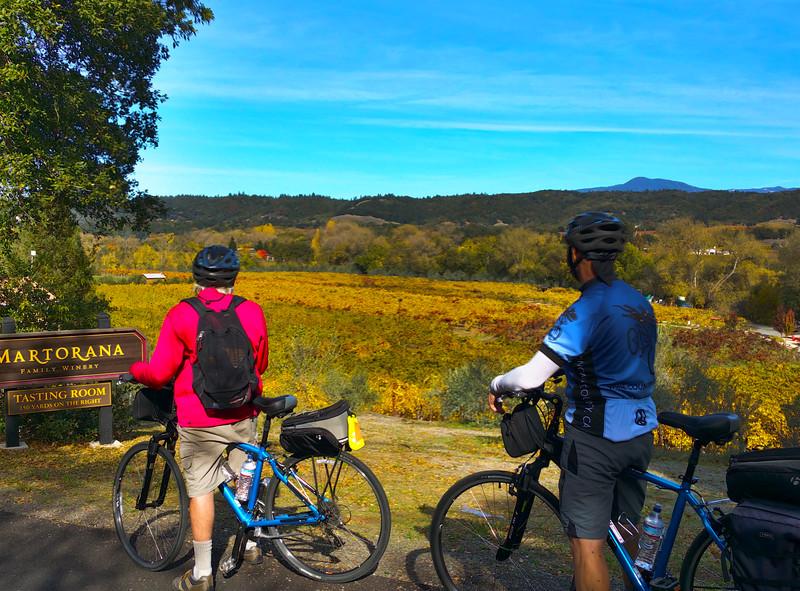 Biking Along Dry Creek Valley, Sonoma