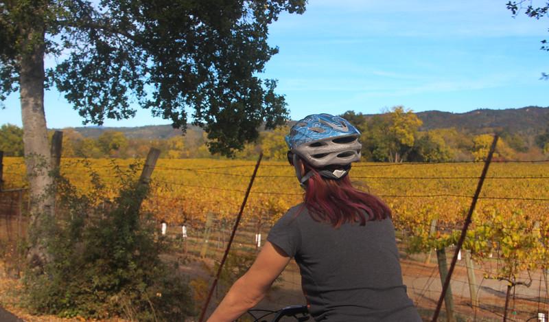 Wine Country Bikes Tour