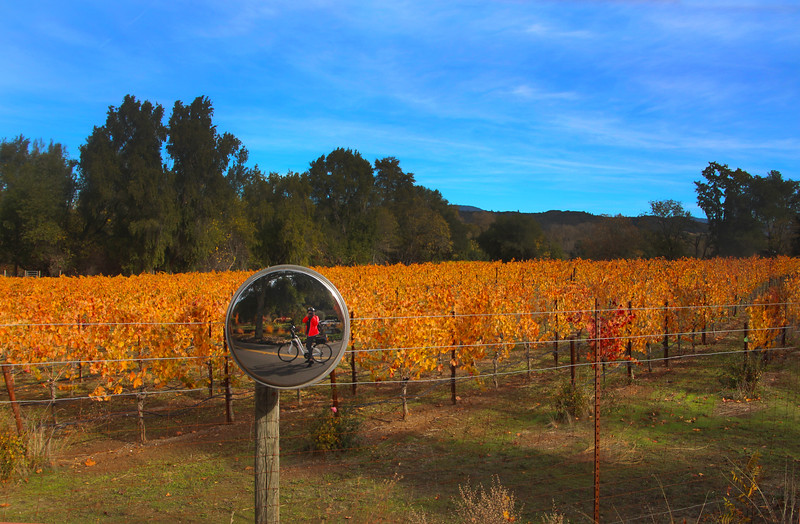 Wine Country Bikes, Dry Creek Road Tour