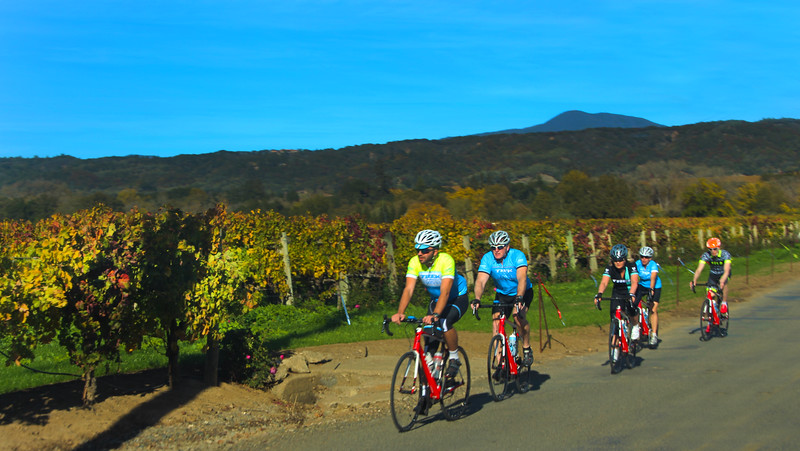 Bicyclists, Dry Creek Valley