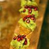 Healdsburg California, Mateo's Cocina Latina, appetizer row