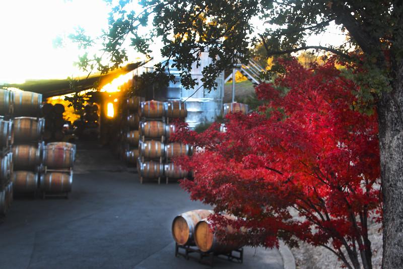 Alexander Valley Vineyards, Barrel Yard at Sunset
